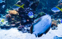 Peixes exóticos no oceano Imagens de Stock