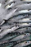 Peixes frescos fotografia de stock royalty free