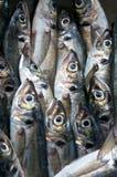 Peixes frescos Fotos de Stock