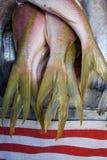 Peixes frescos Imagens de Stock Royalty Free