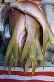 Peixes frescos Foto de Stock Royalty Free
