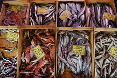 Peixes frescos Fotografia de Stock