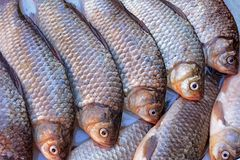 Peixes frescos Foto de Stock Royalty Free