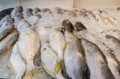 Peixes frescos crus no gelo Imagens de Stock Royalty Free