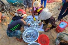 Peixes frescos da colheita travados no mar Imagem de Stock