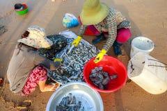 Peixes frescos da colheita travados no mar Fotos de Stock Royalty Free