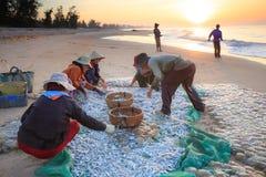 Peixes frescos da colheita travados no mar Fotografia de Stock Royalty Free