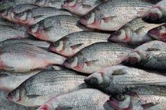 Peixes frescos de prata no gelo foto de stock