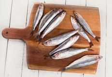Peixes frescos do arenque pequeno Imagem de Stock Royalty Free