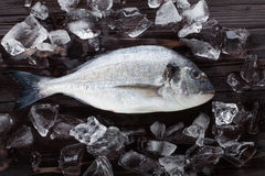 Peixes frescos do dorado no gelo Foto de Stock