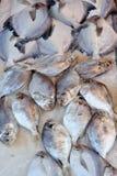Peixes frescos do gelo Imagens de Stock