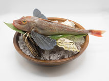 Peixes frescos do mar pronto para o cozinheiro na culinária japonesa Foto de Stock Royalty Free