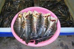 Peixes frescos do peixe-gato que foram cortados para a venda Imagens de Stock Royalty Free