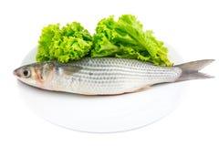 Peixes frescos do salmonete com alface Imagem de Stock