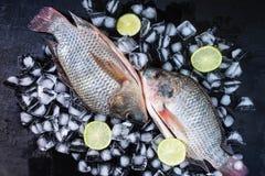 Peixes frescos do tilapia no gelo com pasta do limão imagens de stock royalty free