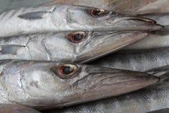 Peixes frescos do trio Imagem de Stock