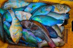 Peixes frescos e coloridos em uma cesta amarela Imagem de Stock