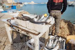 Peixes frescos e marisco no mercado de peixes fotografia de stock
