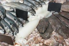 Peixes frescos e o outro marisco Fotografia de Stock