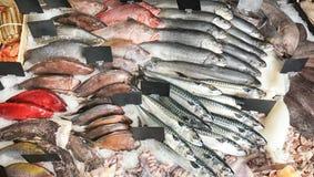Peixes frescos e o outro marisco Imagens de Stock Royalty Free