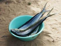 Peixes frescos em África Foto de Stock