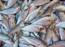 Peixes frescos em um mercado imagens de stock royalty free