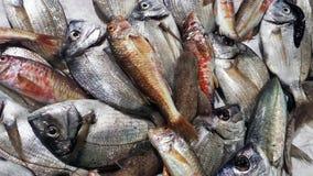 Peixes frescos em um mercado Orata, salmonete vermelho e cações Imagem de Stock