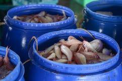 Peixes frescos em uma cesta no mercado de peixes imagem de stock