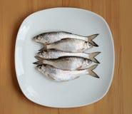Peixes frescos em uma placa Imagens de Stock