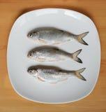Peixes frescos em uma placa Imagens de Stock Royalty Free