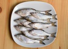Peixes frescos em uma placa Imagem de Stock