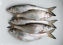 Peixes frescos em uma placa Fotos de Stock