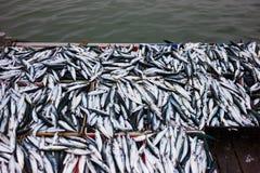 Peixes frescos em umas caixas imagens de stock