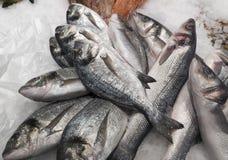 Peixes frescos na exposição Imagem de Stock Royalty Free