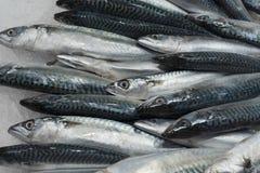 Peixes frescos na exposição Imagem de Stock