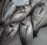 Peixes frescos na exposição Fotografia de Stock