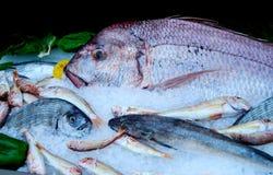 Peixes frescos na exposição do gelo imagens de stock