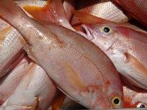 Peixes frescos na praia Imagens de Stock