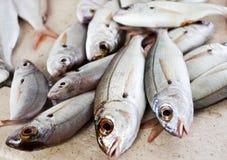 Peixes frescos no contador fotos de stock