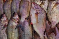 Peixes frescos no fundo do mercado Fotografia de Stock