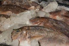 Peixes frescos no gelo fotos de stock