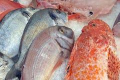 Peixes frescos no gelo Fotografia de Stock