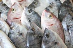 Peixes frescos no gelo Foto de Stock