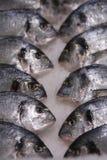Peixes frescos no gelo Imagem de Stock