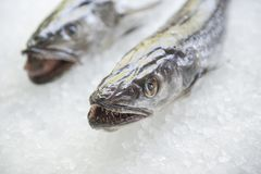 Peixes frescos no gelo no mercado Imagem de Stock Royalty Free
