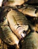 Peixes frescos no mercado Imagens de Stock