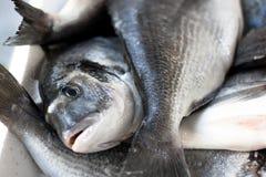 Peixes frescos no mercado Fotos de Stock Royalty Free