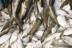 Peixes frescos no mercado Imagem de Stock Royalty Free