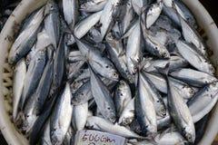 Peixes frescos no mercado molhado Fotografia de Stock