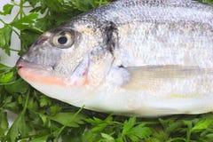 Peixes frescos pacíficos Foto de Stock